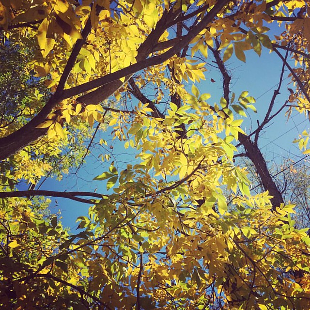Happy Friday! Today I'm so grateful for: 🍁leaves and blue skies 😍 the awesome replies to #bizconfidencechallenge ☕️ coffee & a good breakfast (tofu scramble) What are you grateful for this week? In about an hour we'll be s