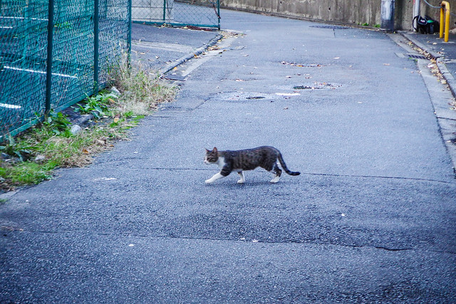 Today's Cat@2015-11-10