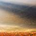 skylight by [Adam Baker]