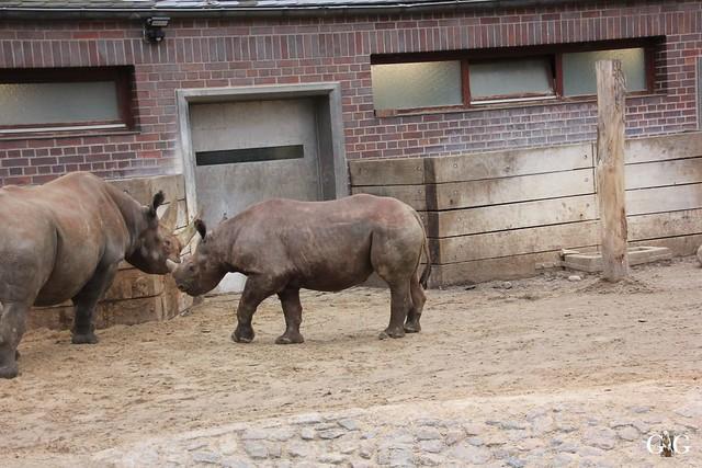 Besuch im Berliner Zoo 06.12.201567