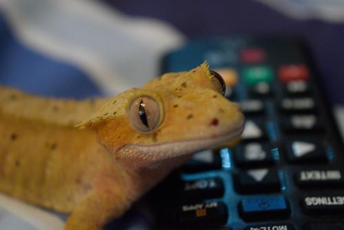 Nacho with remote control