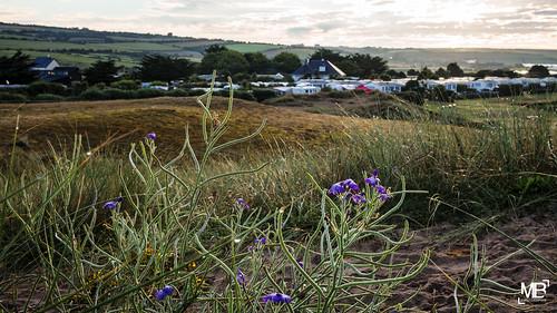 leica morning camping france nature sunrise landscape dunes dew normandie paysage manche naturel cotentin rosée leicamp leicam lespieux télémètre