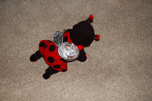 Ladybug on the Floor