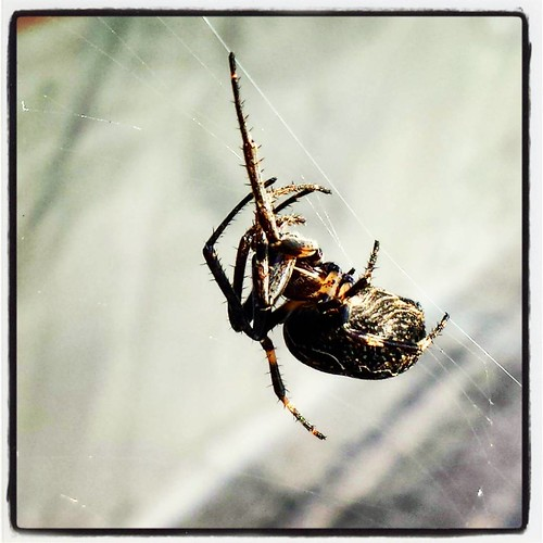 Spider III. I actually like spiders. #spider #arachnid