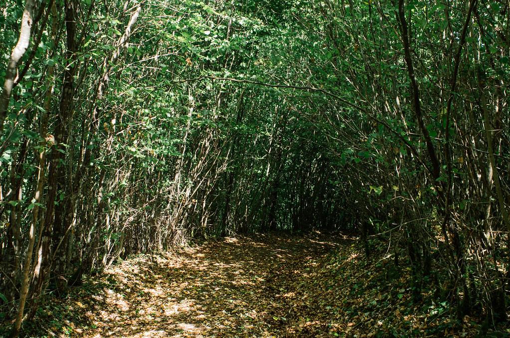 Observer les animaux - Forêt d'Auberive - Les galeries végétales