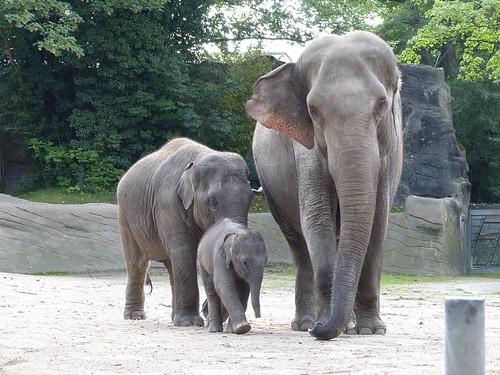 Elefanten Hagenbeck
