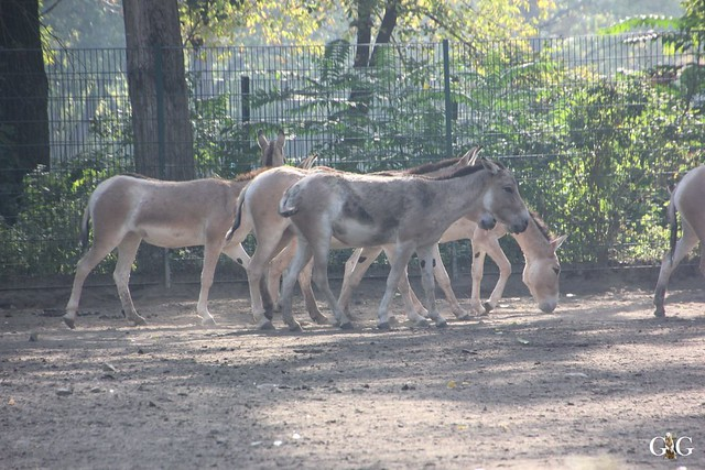 Sonntags-Besuch im Tierpark Friedrichsfelde 04.10.201564