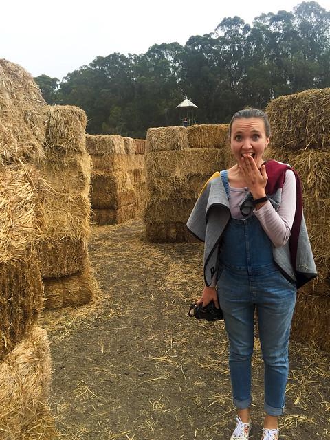 03 October, 2015 - Arata Farms
