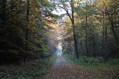 1. November 2015 - 15:44 - Blätterwald