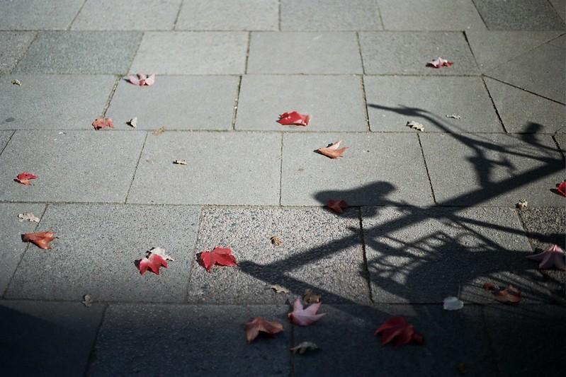 Autumn // Schorlemädchen