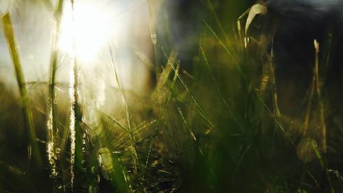 usa landscape nature california sunset la beach light sun summer grass green color bright gold golden sparkle macro inspiration beautiful nice cool park sky peace lovely natural detail repoussoir outside natur sunlight great flickr sunshine shine
