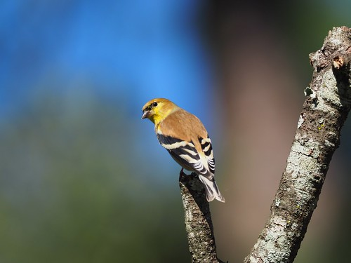 huntwick huntwickbirds