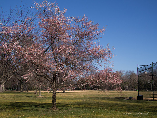 Spring in February