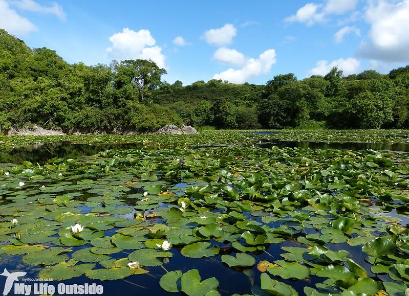 P1150447 - Bosherston Lily Ponds