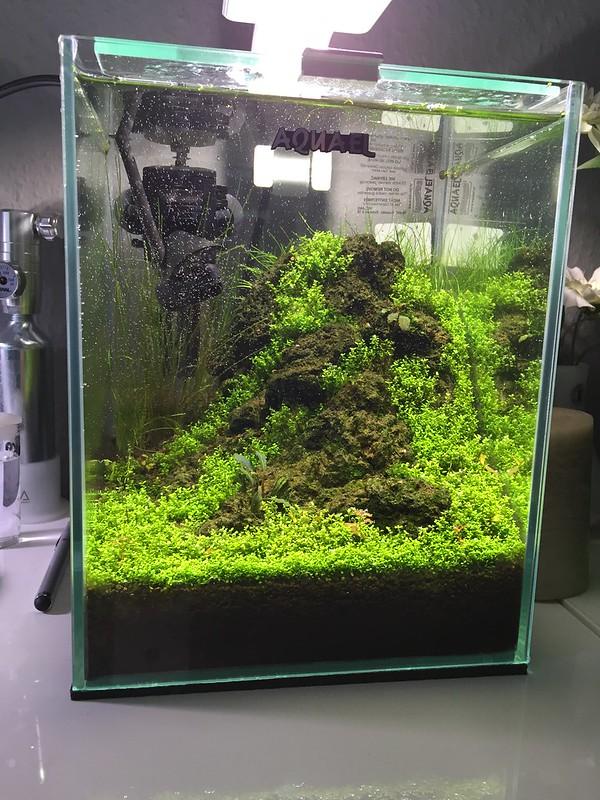 10l cube beleuchtung co2 einrichtung und gestaltung aquascaping forum. Black Bedroom Furniture Sets. Home Design Ideas