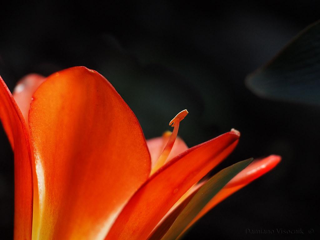 Flower_1_c