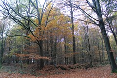 1. November 2015 - 15:59 - Tolle Farben 4