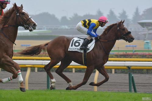 20151108 東京5R 返し馬 ウインドオブホープ