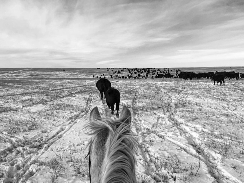 The world is best viewed from the back of a horse. #teamblonde #cowboygirl #life #lifebetweentheears #instagood #lifebetweentheseears #betweentheirears #throughtheirears #bnw_demand #blackandwhite #ranching #ranchlife #ig_equine #equine #thedxranch #thevi