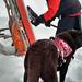 K9 ski patrol by Becka