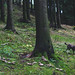 Fairy ring with dog by Kalbsroulade