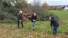 Duke of Edinburgh Award planting trees Mountsfield Park