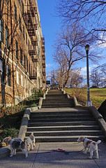 The 214th St. stairs