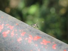 20161215 Bug on railing