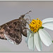Mariposa - Butterfly por J. Amorin