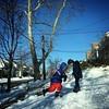 Snow buds. 1,648d/1,149d