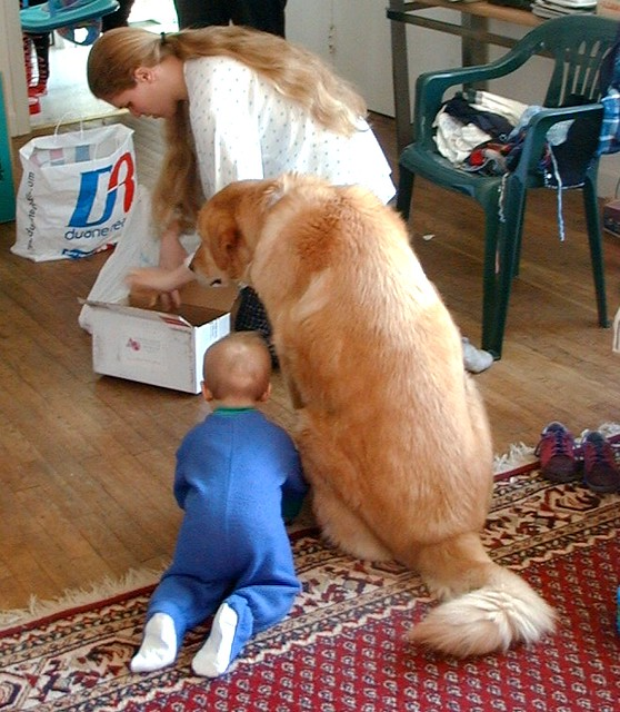 Dog Giving Cpr Youtube