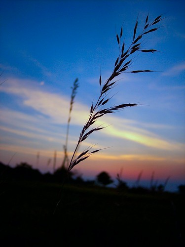 sunset macro nature silhouette closeup nationalpark grasses shenandoah naturescenes shenandoahnationalpark interestingness48 kodakz760 calendarshot i500 drewmyers easternnorthamericanature explore17jun06 top10nature abigfave drewmyersphotonet
