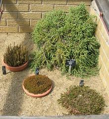 New Zealand South Island Rock Garden Plants