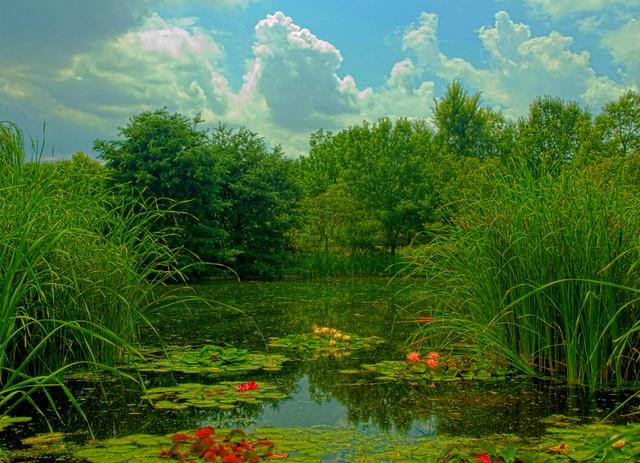 Wichita Botanica Flickr Photo Sharing