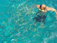 diving(0.0), underwater(0.0), aqua(1.0), swimming(1.0), sports(1.0), sea(1.0), recreation(1.0), outdoor recreation(1.0), marine biology(1.0), azure(1.0), water sport(1.0),