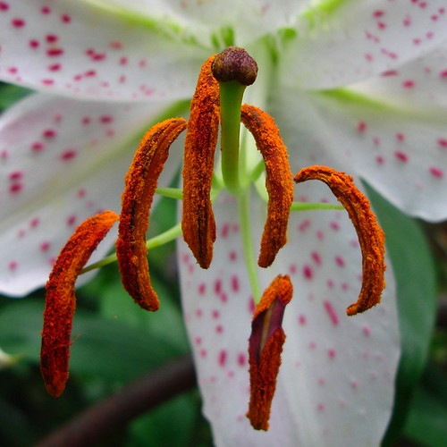 pistil and the stamen