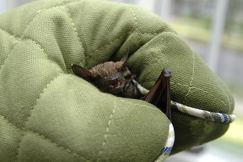 bats are supposed to stay in the belfry! II.