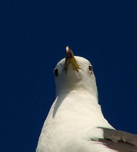 Watching Me?