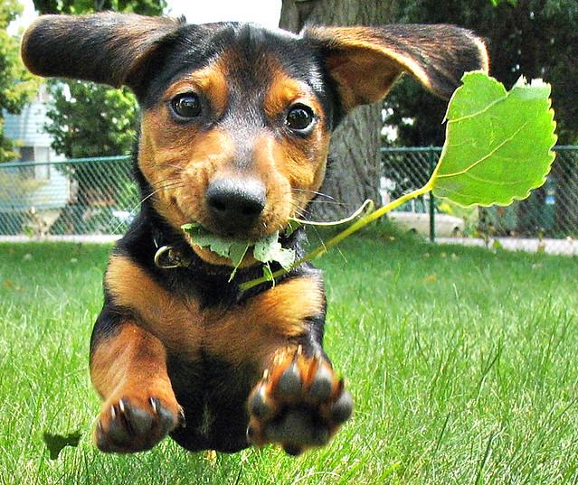 Wilbur Likes Leaves