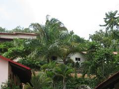 arecales, garden, property, eco hotel, estate, real estate, condominium,