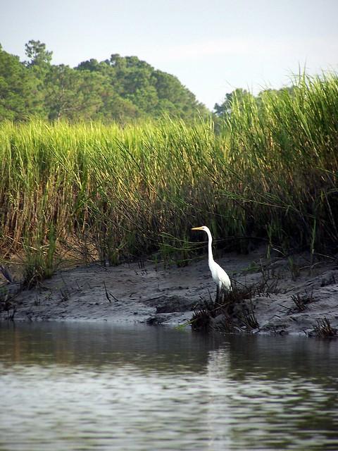 Carolina Landscape Hilton Head Island