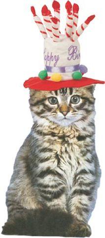 Cat In Birthday Hat