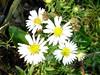 Flowers-Fall Caesar Creek State Park Ohio 05