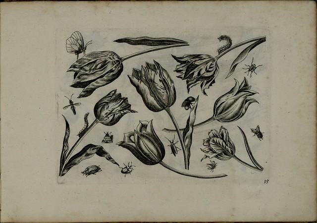 Viridarium Novum l