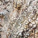 Ein weiteres Baumbild