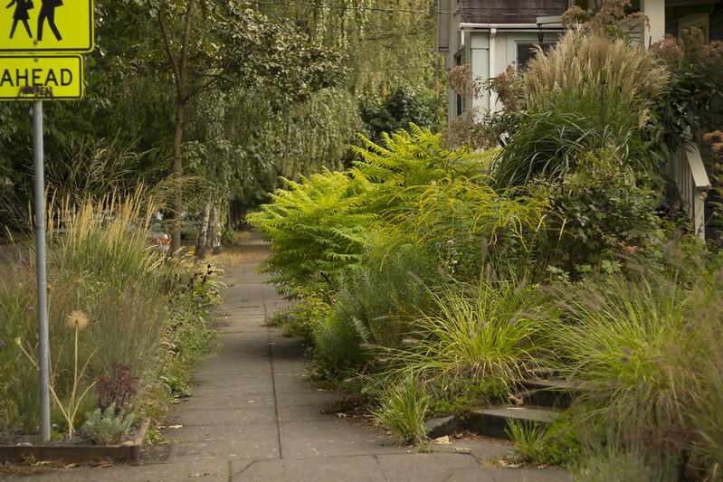 front garden shady2