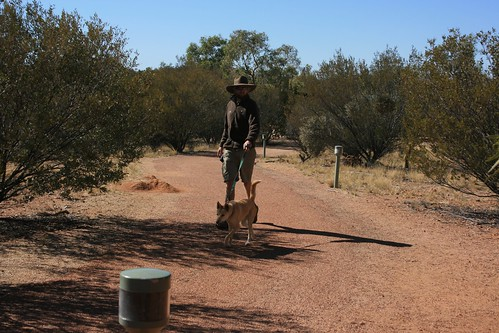 Walking the Dingoes