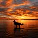 September Sunrise by ~EvidencE~