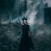 The Black Widow by Adam Bird Photography