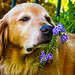 """""""Take Time To Smell the Flowers"""" by Cathy Lorraine"""
